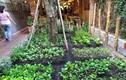 Vườn rau sạch trong quán ăn Mười Khó của Trường Giang