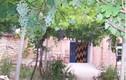 Trang trí cổng nhà bằng dàn cây rau quả siêu độc lạ