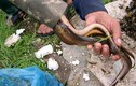 Độc đáo nghề đặt ống săn lươn đồng kiếm tiền triệu dễ như chơi