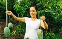 Mát mắt ngắm vườn cây trái trĩu quả của nghệ sĩ Chiều Xuân
