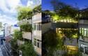 Nhà lạ ngập tràn tre xanh tuyệt đẹp ở Sài Gòn