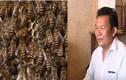 Thu nhập khủng nhờ tổ ong ở trong nhà suốt 12 năm