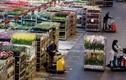 Tận mục sàn đấu giá hoa tươi lớn nhất thế giới