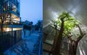 Báo Mỹ khen hết lời nhà tầng thiết kế cây xuyên ở Vinh