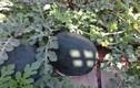 Bên trong vườn dưa hấu đen giá trăm triệu đồng/quả