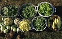 Đẹp đốn tim những vườn rau Việt đáng ngưỡng mộ ở Mỹ