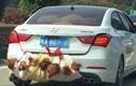 """Những chiếc ôtô mang biển số """"con gà, con vịt"""""""