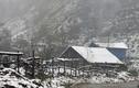 Ngắm cảnh tuyết rơi trắng trời tuyệt đẹp ở Sapa