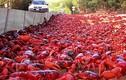 Ngoạn mục cảnh hàng trăm triệu cua đỏ lũ lượt di cư