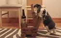 Kỳ lạ thỏ con biết lấy bia cho chủ uống