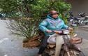 Người Việt chở đồ cồng kềnh bằng xe máy lên báo Anh