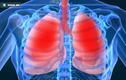 5 thứ làm hại tim, phổi, thận, gan... nhiều nhất cần bỏ ngay
