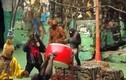 Video: Khỉ múa lân vui nhộn