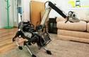 Video: Bất ngờ khi chó robot gặp chó thật
