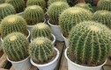 12 con giáp nên trồng cây gì để thu hút tiền bạc, tài lộc?