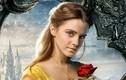 Diễn viên Emma Watson kiếm hơn hơn 400 tỷ khi mới 19