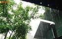 Thời tiết hôm nay 14/6: Hà Nội có mưa rào và dông