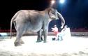 Thích thú xem voi rửa mặt cho người