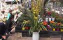 Mê mệt vườn cây cảnh chơi Tết rẻ nhất Hà Nội