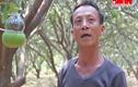 Gặp người tiên phong trồng bưởi hồ lô tại Đồng Nai