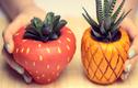 Cách làm chậu cây hình hoa quả cho bạn nữ khéo tay