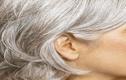 Vì sao tóc chúng ta lại bạc khi già?