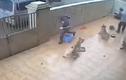 Clip cẩu tặc vào tận nhà bắt trộm chó gây căm phẫn