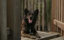 Rớt nước mắt với clip về lòng trung thành của chú chó nhỏ