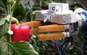 Xem máy móc thay nông dân thu hoạch hoa quả ở nước ngoài