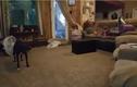 Chú chó làm trò khiến 2 em bé không nhịn được cười