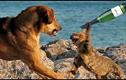 """Không thể nhịn cười với những con vật """"bá đạo"""" nhất thế giới"""