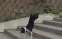 """Những cách leo cầu thang """"bá đạo"""" của chó cưng"""