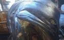 Bắt được cá mú 200kg nghi nuốt chết một nhân viên an ninh