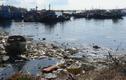 Cảng cá La Gi ô nhiễm trầm trọng khiến dân khó thở