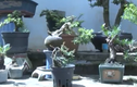 """Dân tình phát """"sốt"""" với những tạo hình của bonsai mini"""