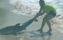 Video: Người đàn ông tay không đưa cá mập mắc cạn về biển