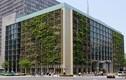 Ngỡ ngàng với rau và lúa được trồng trong tòa cao ốc hiện đại