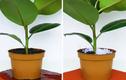 Video: Bất ngờ công dụng của những gói chống ẩm