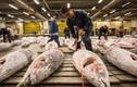 Video: Chợ bán cá ngừ ngon nhất thế giới ở Nhật Bản