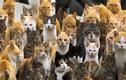 Video: Vì sao mèo có 10 hành vi kỳ quặc này?