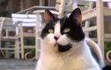 Video: Điều gì đáng sợ ẩn sau đôi mắt của mèo?