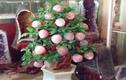 Video: Trào lưu chơi cây phong thủy đào tiên thạch anh, nho đá quý giá trăm triệu