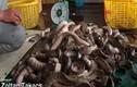 Hãi hùng tay không bắt rắn biển ở Việt Nam