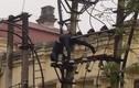 Thanh niên ngáo đá trèo biến áp, bị điện giật rơi xuống đất