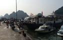 Quảng Ninh đến Nam Định căng mình chuẩn bị chống bão số 7