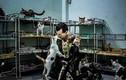 Người đàn ông Pháp nuôi hàng trăm chó mèo bị bỏ rơi ở Sài Gòn