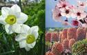 Những loại hoa quả Tết mang may mắn đến cả năm