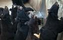 Bên trong cơ sở lấy mật gấu của Trung Quốc bị lên án
