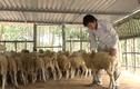 Những trang trại vật nuôi kiếm tiền tỷ giữa lòng phố
