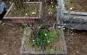 Thăm những vườn mai, đào, quất cảnh tiền tỷ đón Tết